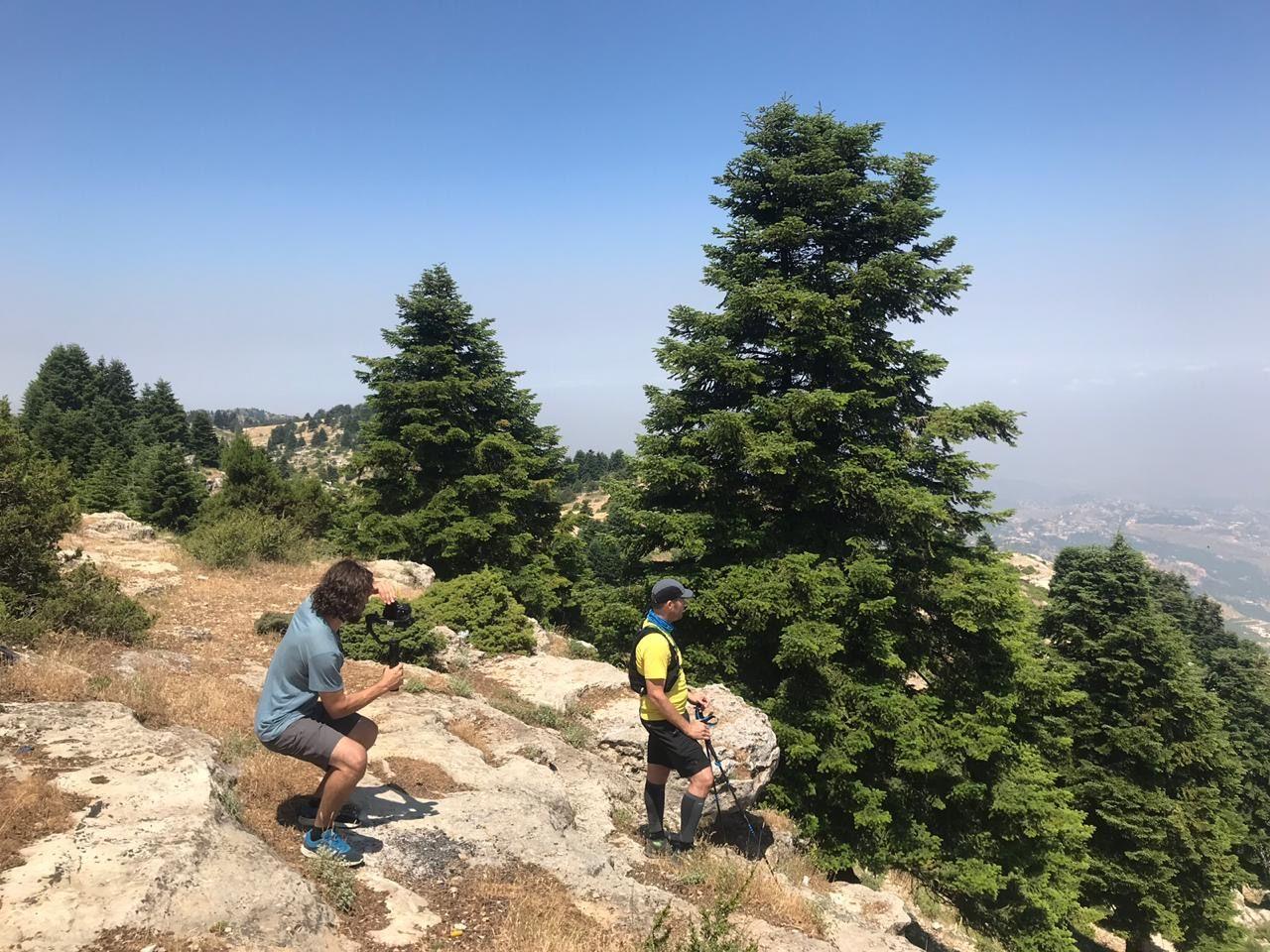 mountain top trees